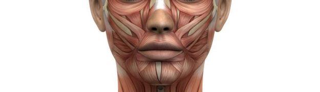 Músculos de la nariz en rinoplastia